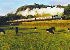 GWR Prairie 5542 at Williton on 1st October 2004